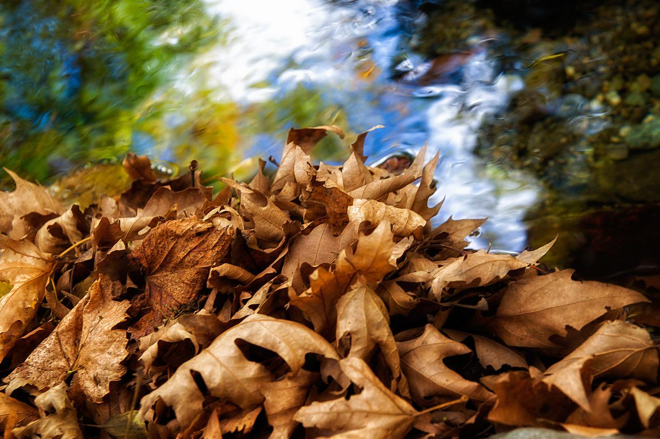 Høst. Foto: Teophilos Papadopoulos, flickr.com